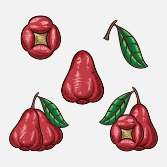 Hand gezeichnete skizzenillustration der rosenapfelfruchthand