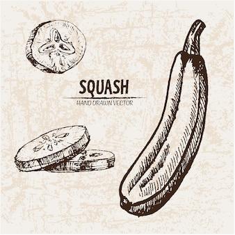 Hand gezeichnete squash-sammlung