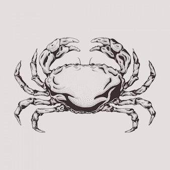 Hand gezeichnete stichart-krabbenillustration
