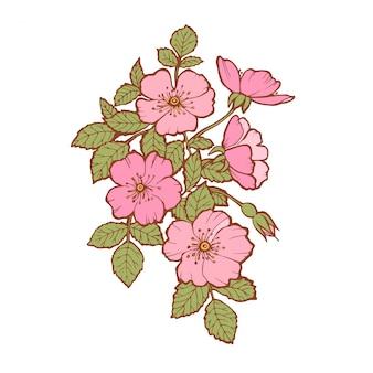 Hand gezeichnete stiefmütterchenblumen
