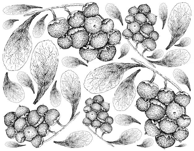 Hand gezeichnete tapete von reifen manjack-früchten auf weißem hintergrund