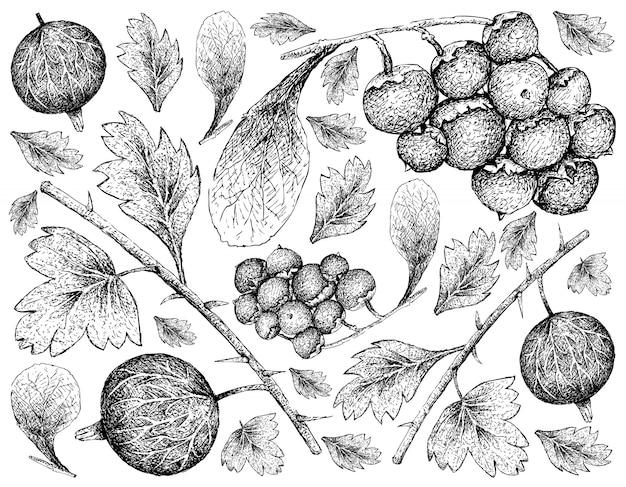 Hand gezeichnete tapete von reifen stachelbeeren und von manjackfrucht-hintergrund