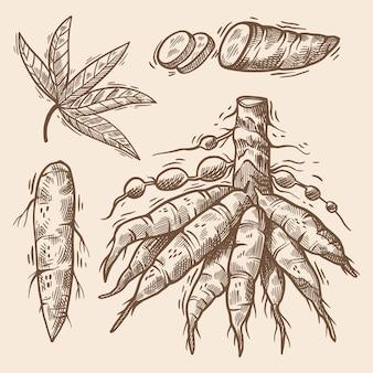 Hand gezeichnete tapioka-illustration