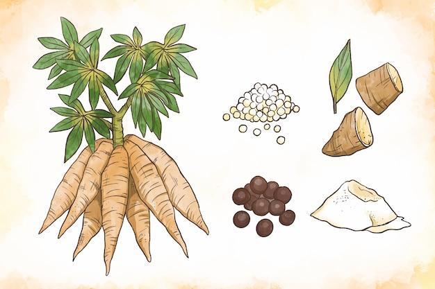 Hand gezeichnete tapioka-illustrationspackung