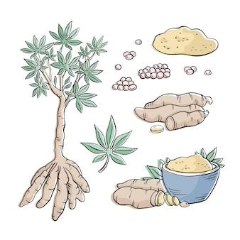 Hand gezeichnete tapioka-illustrationssammlung