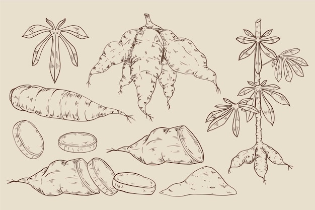 Hand gezeichnete tapioka-sammlung
