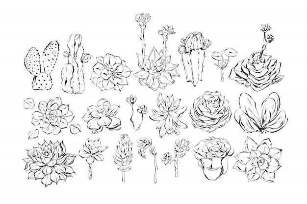 Hand gezeichnete tintenpinsel strukturierte skizze zeichnung große sammlung mit saftigen und kaktusblumen auf weißem hintergrund gesetzt. hochzeit und geburtstag dekorationselemente Premium Vektoren