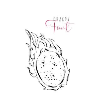 Hand gezeichnete tropische drachenfrucht