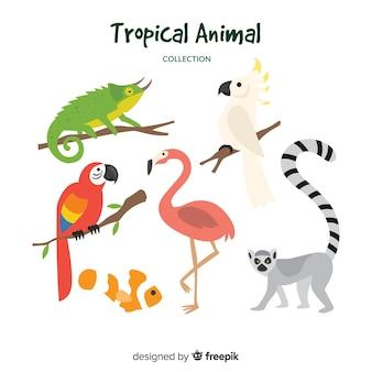 Hand gezeichnete tropische tiersammlung