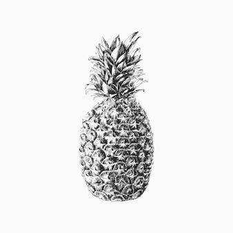 Hand gezeichnete vektor-ananas-illustration