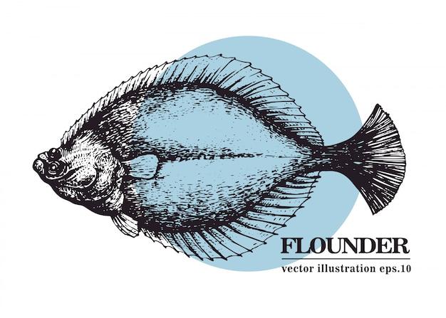 Hand gezeichnete vektorweinleseillustration von schollenfischen.