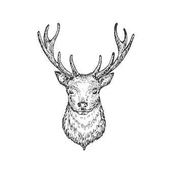 Hand gezeichnete weihnachten rentier oder hirschkopf vektorillustration abstrakte tiergesichtsskizze winter ho...