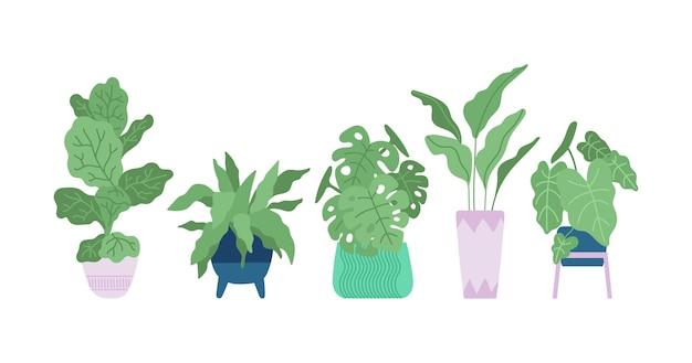 Hand gezeichnete zimmerpflanzensammlung illustriert