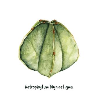 Hand gezeichneter astrophytum myriostigma bischof