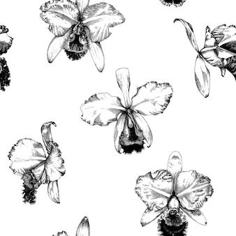 Hand gezeichneter cattleya-orchideen-blumen-muster-hintergrund
