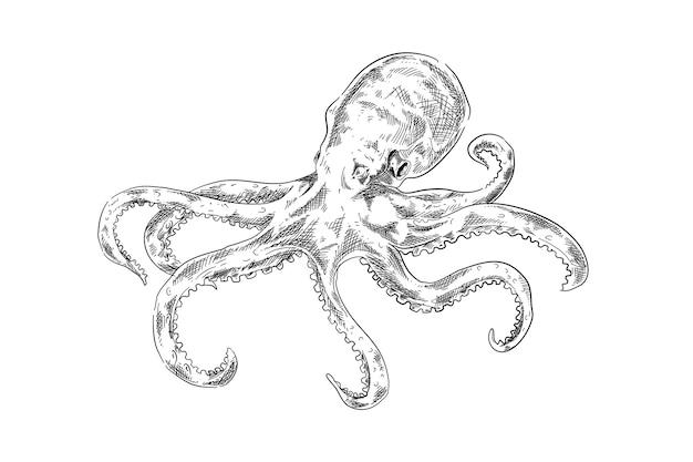 Hand gezeichneter design-oktopus