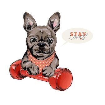 Hand gezeichneter französischer bulldoggenhund sitzt mit einer hantel. zu hause bleiben.