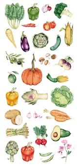 Hand gezeichneter Gemüsesammlungsvektor