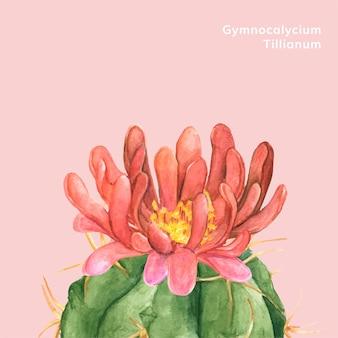 Hand gezeichneter gymnocalycium-tillianum kaktus
