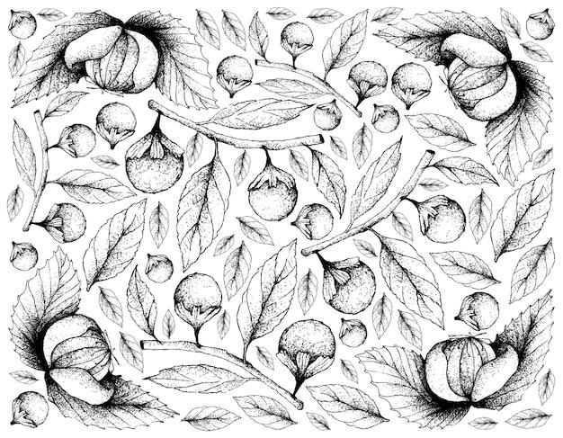 Hand gezeichneter hintergrund von dengen und von cordia caffra fruits