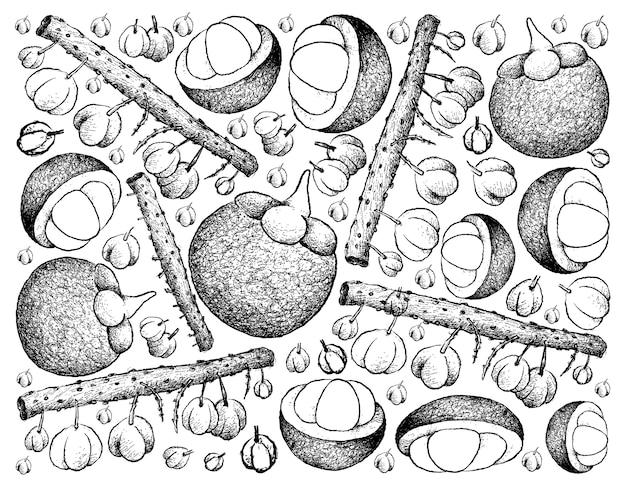 Hand gezeichneter hintergrund von otaheite stachelbeere und mangostanfrucht
