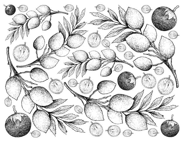 Hand gezeichneter hintergrund von stern apple fruits