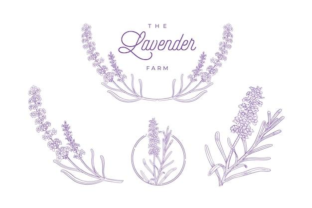 Hand gezeichneter illustrationssatz der lavendelpflanze