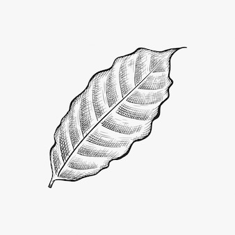 Hand gezeichneter kaffeeblattvektor