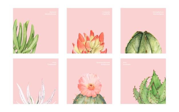 Hand gezeichneter kaktus und succulents