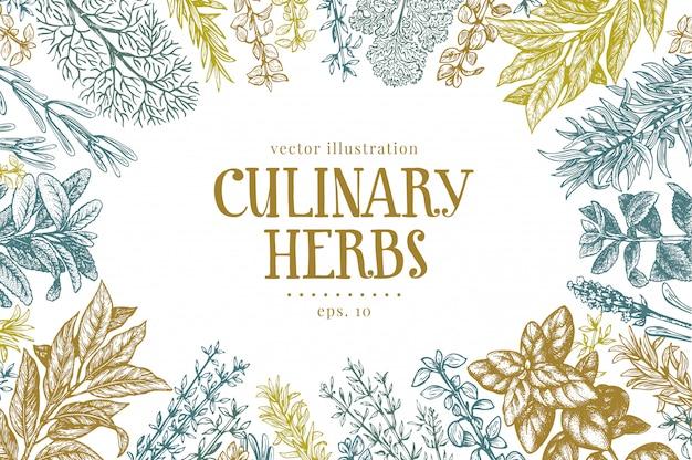 Hand gezeichneter kulinarischer kräuter- und gewürzhintergrund