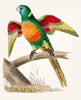 Hand gezeichneter lang angebundener grüner papagei