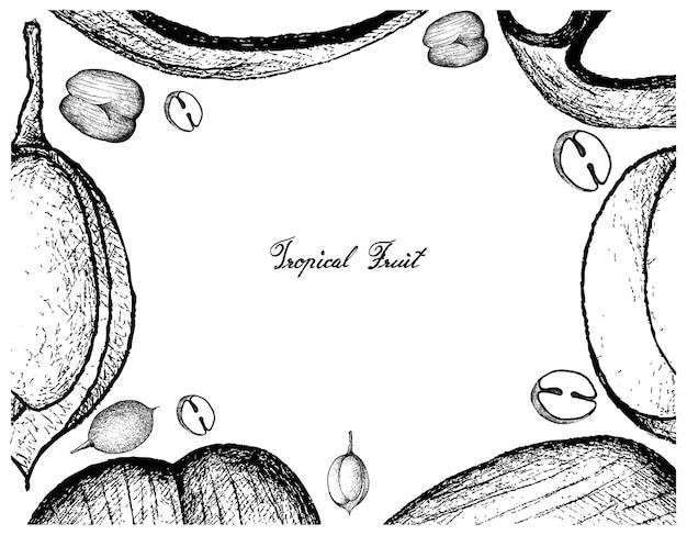 Hand gezeichneter rahmen von doppelten kokosnuss- und mamoncillo-früchten