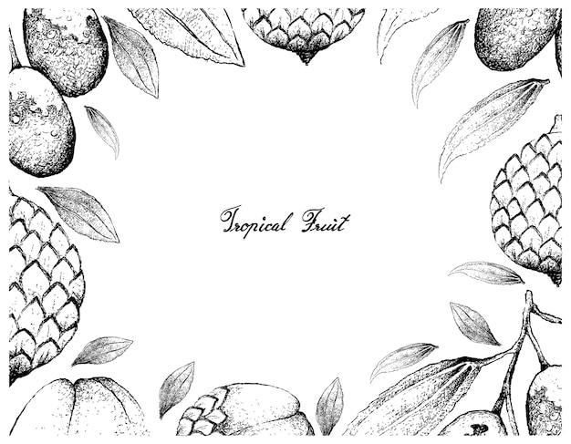 Hand gezeichneter rahmen von jujube- und rattan-früchten