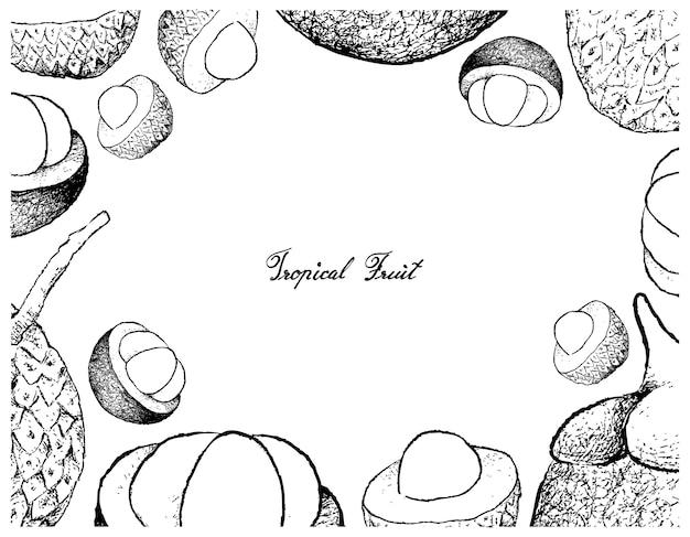 Hand gezeichneter rahmen von litschi-und mangostanfrucht-früchten