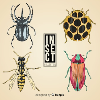 Hand gezeichneter realistischer insektensatz