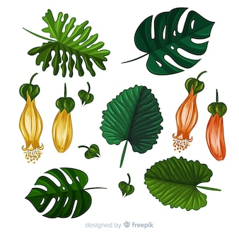 Hand gezeichneter realistischer satz der tropischen pflanzen