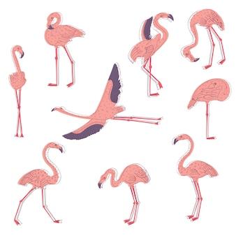 Hand gezeichneter satz des rosa flamingos in verschiedenen posen. exotischer vogel mit langen beinen und hals. wildlife-thema