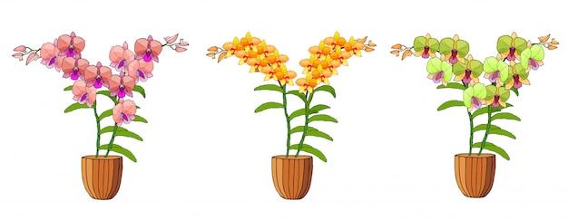 Hand gezeichneter satz orchideen in den blumentöpfen.