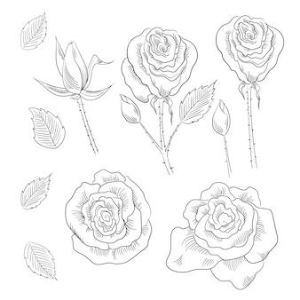 Hand gezeichneter satz von rosen, rosenknospen und blättern