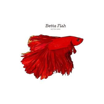 Hand gezeichneter vektor roter betta splendens fisch.