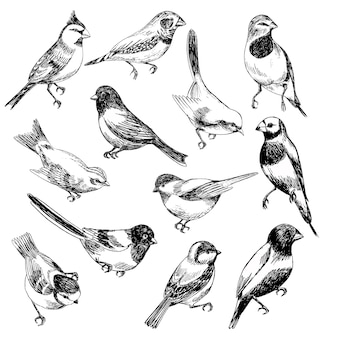 Hand gezeichneter vektorsatz vögel im skizzenzauntritt