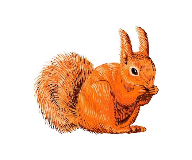Hand gezeichnetes eichhörnchen, das nuss isst