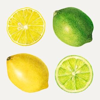 Hand gezeichnetes gemischtes zitrusfruchtset