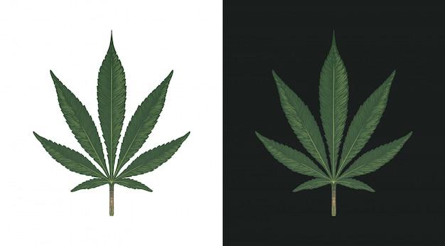 Hand gezeichnetes marihuana-blatt. grüne cannabisblätter