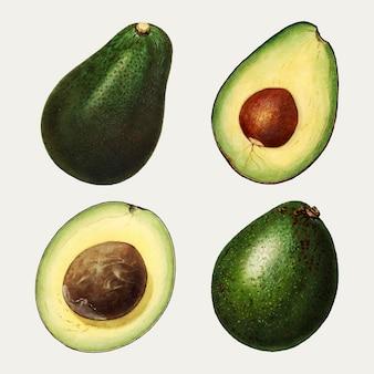 Hand gezeichnetes natürliches frisches avocado-set