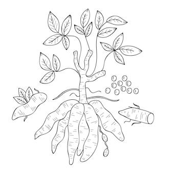 Hand gezeichnetes tapiokakonzept