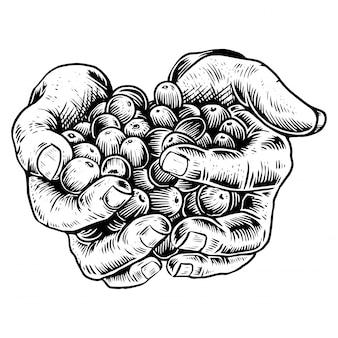 Hand mit kaffeebohnen gravur