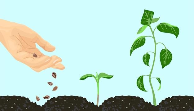 Hand mit samen und pflanzensprosse.