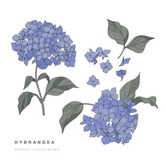 Hand zeichnen hortensie blumen illustration. botanische blumenkarte
