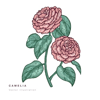 Hand zeichnen kamelienblumen illustration. blumenkranz. botanische blumenkarte auf weißem hintergrund.